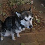 hondencoach honden probleemgedrag