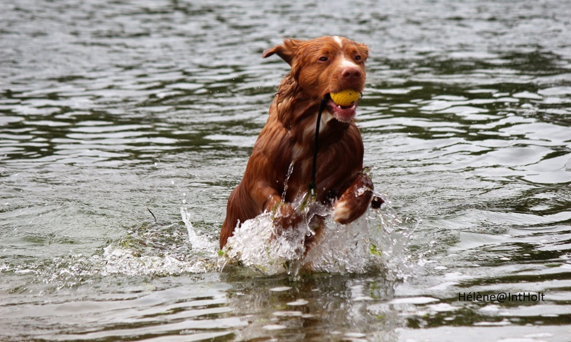Hondencoach Hélène
