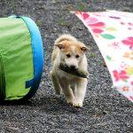 hondentraining puppy hondenschool Overloon